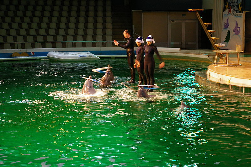 La Cours de Justice Grecque interdit les delphinariums !