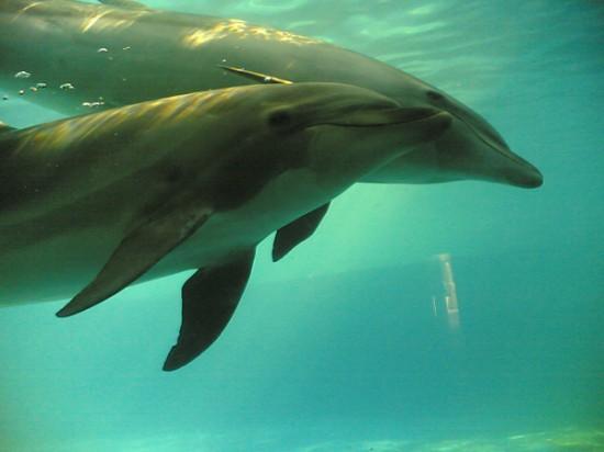 dauphins captifs