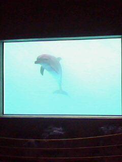 La face cachée des delphinariums