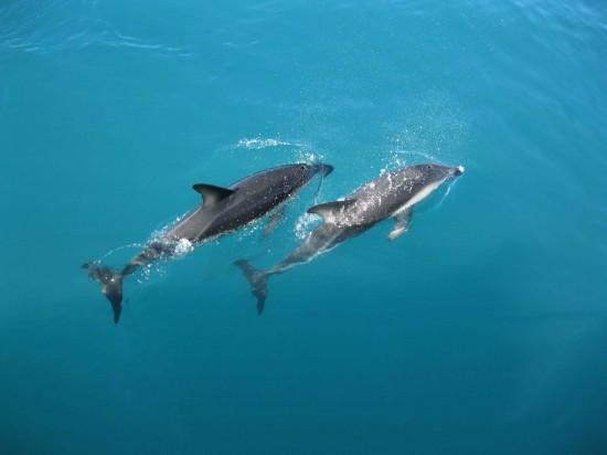 Une famille américaine sauve deux dauphins de l'asphyxie