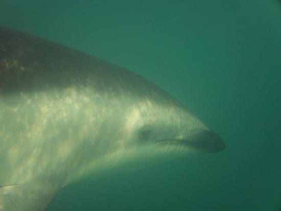 Créer un contact visuel avec les dauphins