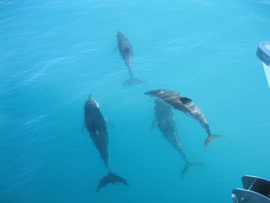 Nager avec les dauphins, mais dans des conditions éthiques !
