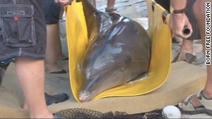 Les deux dauphins étaient en très mauvaise santé lorsque les défenseurs des droits des animaux les ont découvert dans un parc touristique délabré en 2010.