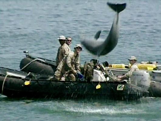 Dauphin militaire de l'armée américaine