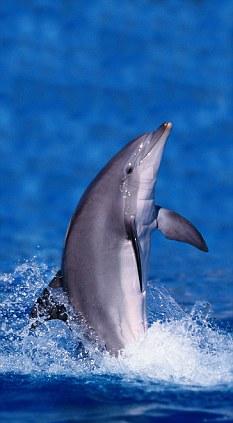 Le cerveau des dauphins, plus puissant que nos ordinateurs