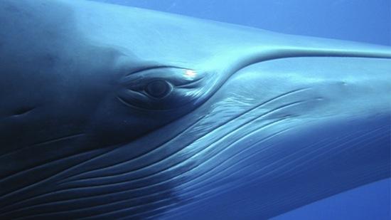 """""""Il faut comprendre qu'avant ces derniers millénaires, la plupart de la culture était dans les océans. Certainement, les cultures les plus sophistiquées sur Terre étaient les baleines et les dauphins, jusqu'à ce que des étranges bipèdes humanoïdes évoluent."""""""