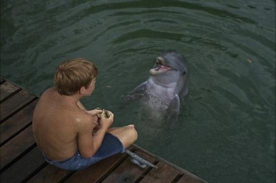 Le succès de la série Flipper le dauphin a contribué à l'essor de l'industrie des delphinariums