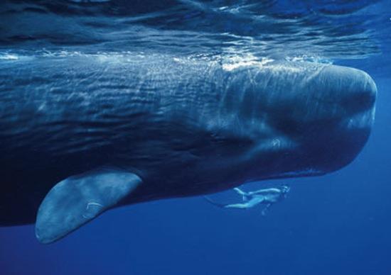 Pourquoi les baleines sont aussi des personnes - Photo: Jonathan Bird/Getty