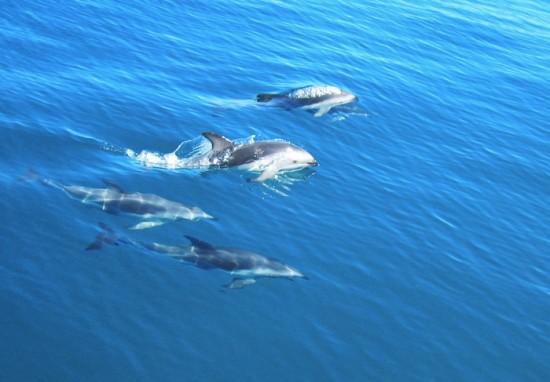 Quels métiers pour travailler avec les dauphins ?