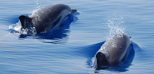 Combien de temps dure la rencontre avec les dauphins a marineland