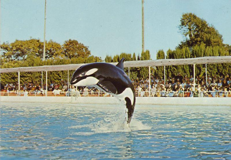 The orcas in the Marineland, Antibes