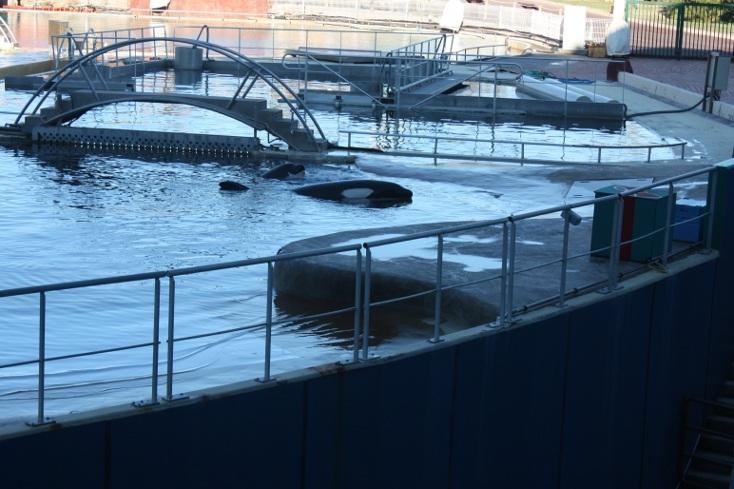 Le bassin des orques au Marineland