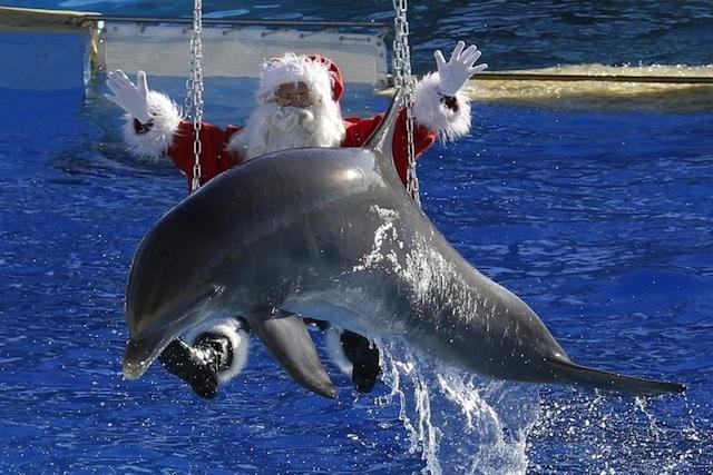 combien de temps dure la rencontre avec les dauphins à marineland