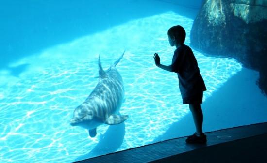 Les dauphins prisonniers des delphinariums souffrent