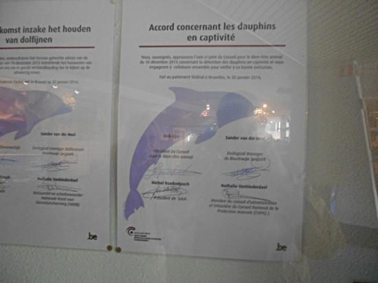 Accord concernant les dauphins - Bruges 2014