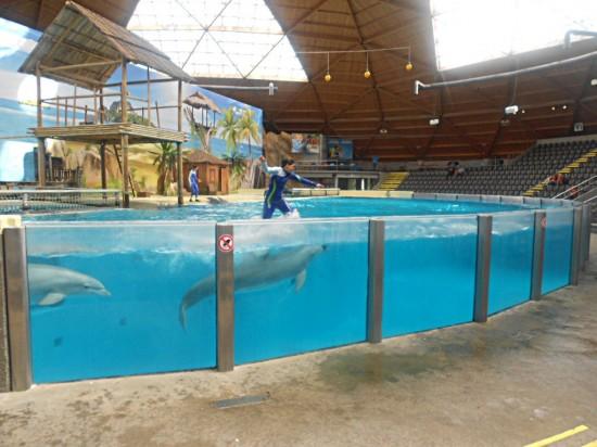 Chevaucher un dauphin fait partie du spectacle