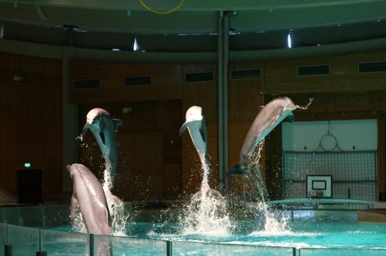 Finland-dolphins-Särkänniemi_dolphinarium