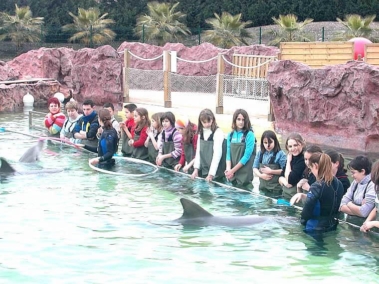Rencontre Avec Les Dauphins En France - Rencontre avec les animaux Marineland