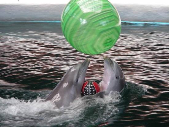 Le Show des dauphins de Verna en Bulgarie