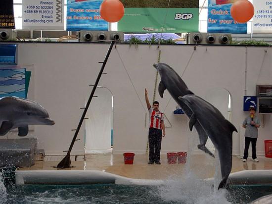 Show des dauphins