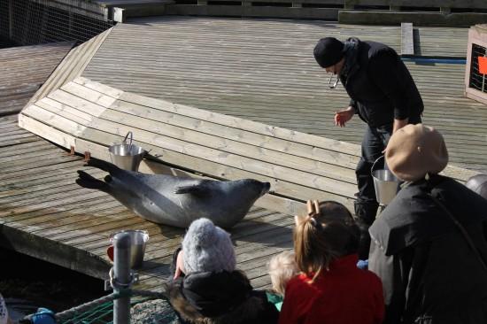Show de phoque au Danemark