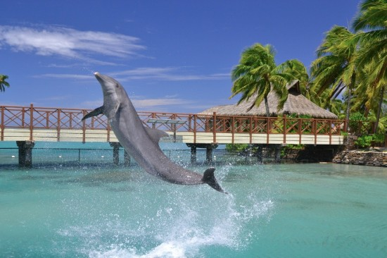 Moorea Dolphin Center, France
