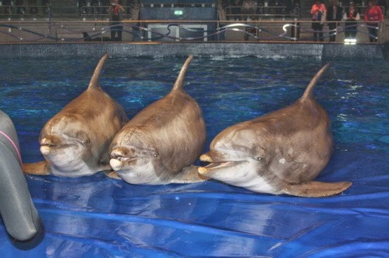 pays-bas-hardewijk-dauphins-obeses