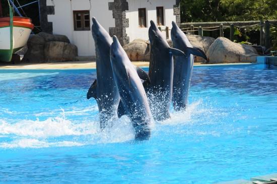 portugal-Zoo-Lisbonne