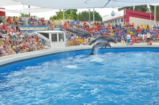 Des dauphins de Taiji en Roumanie
