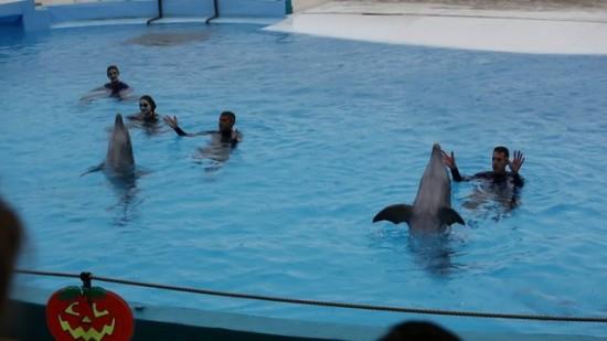 Nageur avec les dauphins