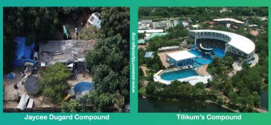 Comparaison entre Tilikum et Duggard