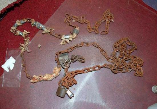 Chaines trouvés dans la maison d'horreur d'Ariel Castro