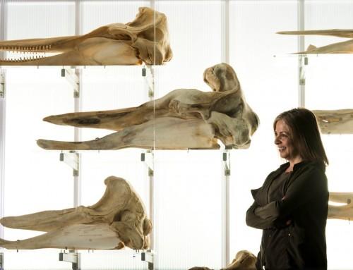Lori Marino, leader d'une révolution de notre perception des animaux