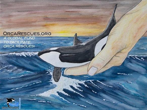 image de présentation Orca Rescues