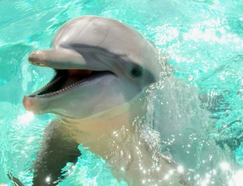 Do dolphins have a conscience too?