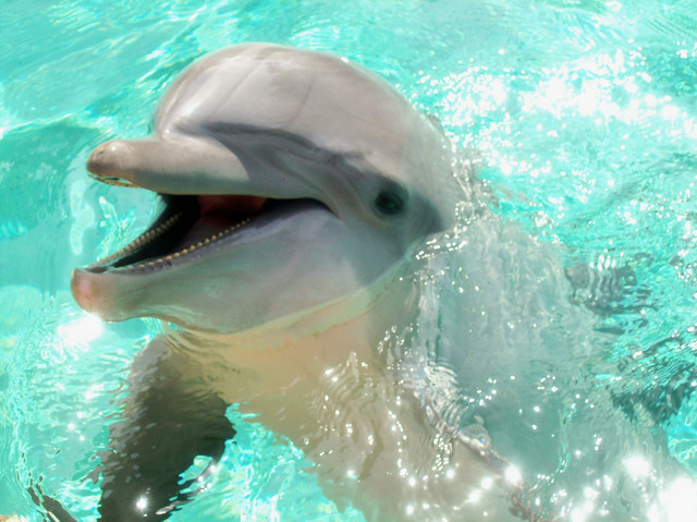 do dolphins have a conscience too