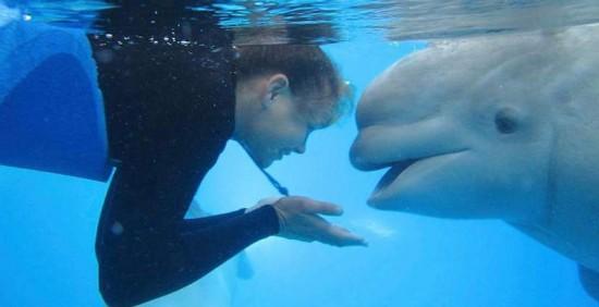 Stella_beluga_whale