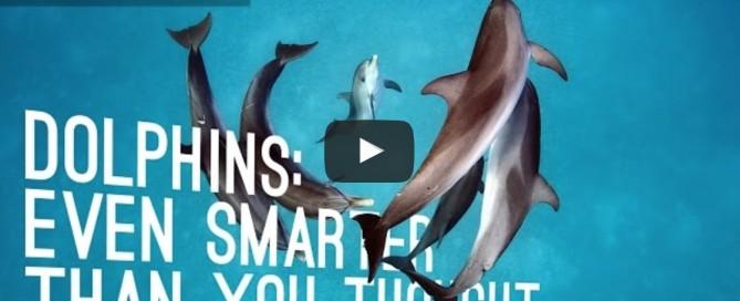 Les dauphins : encore plus intelligents que vous ne le pensiez