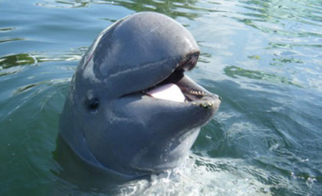 A glimmer of hope for the endangered dolphins of Bangladesh
