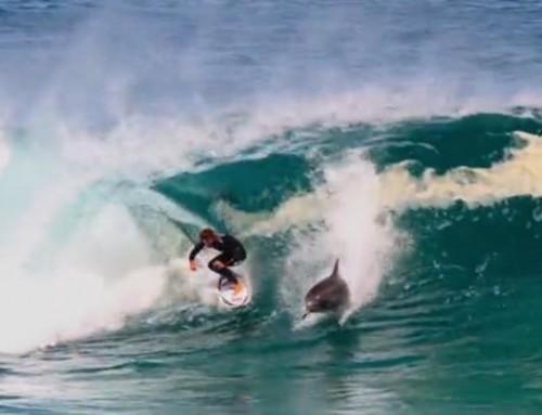 La rencontre inattendue entre un surfeur et un dauphin