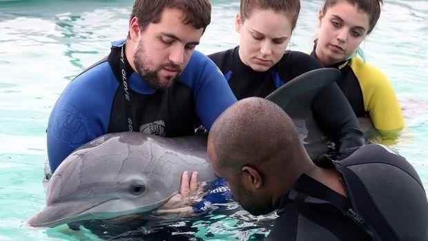 Un dauphin échoué est soigné et remis à l'eau