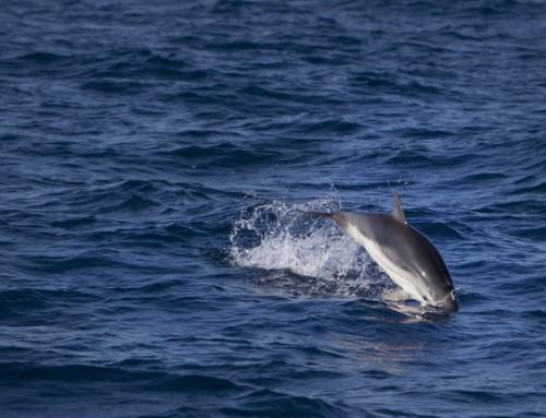 Marseille: Un scientifique veut créer un centre de soins pour les dauphins dans un tunnel