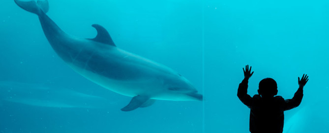 Vers la fin de la captivité et du massacre des dauphins