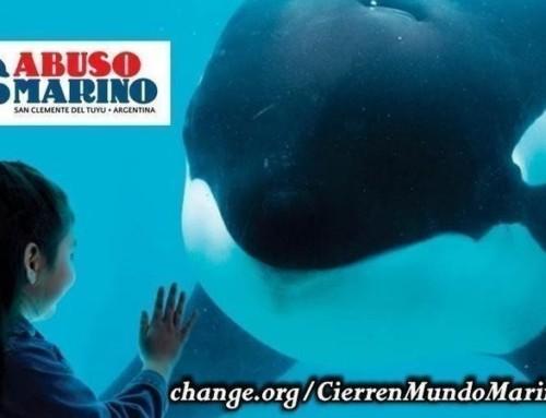 Let's close MUNDO MARINO !
